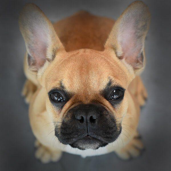 Foto von Hund Franz